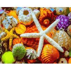 STK Картина по номерам. Ракушки и звезды, море, 40*50 см, Brushme в коробке+лак