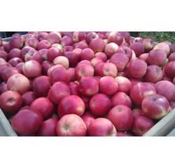 Яблука сорту Флоріна