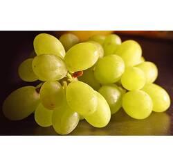 Саджанці винограду Легенда