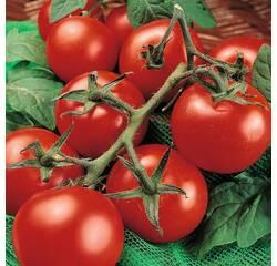 Насіння томату Манімейкер