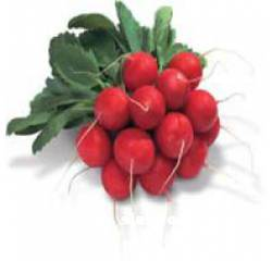 Насіння редису Сора (інкрустоване насіння)