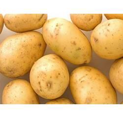 Картопля насіннєва першої репродукції