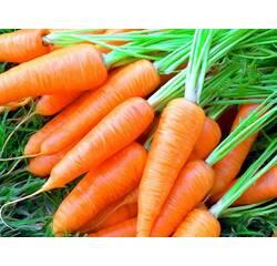 Екстракт насіння моркви купити в Києві