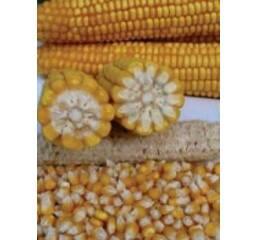 Насіння кукурудзи ПР39А61