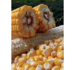 Насіння кукурудзи ПР39А50