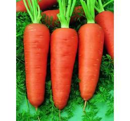 Морковь Долянка за 20 г