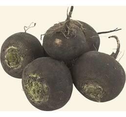 Семена редька черная
