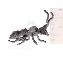 Кована мураха