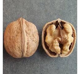 Саджанці горіха сорту Кодрене