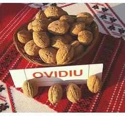 Саджанці горіха сорту Овідіу