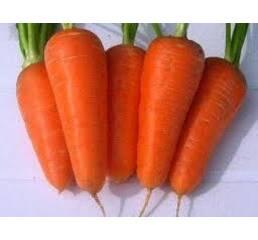 Семена моркови Болтекс F1