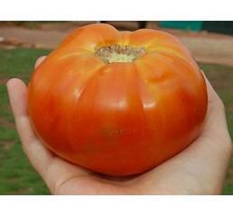 Семена томата Шапка Мономаха