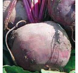 Семена свёклы столовой Болтарди