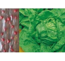Дражированные семена на ленте Салат кочанный Верна