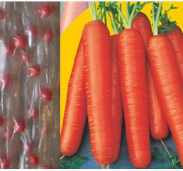 Дражированные семена на ленте Морковь Марион F1