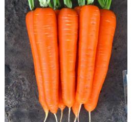 Морковь Лагуна F1  за 10 г