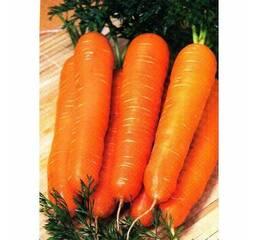 Морковь Красный гигант за 20 г