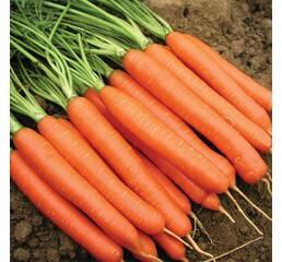 Морква Нантес (дражированные за 400 сем.)