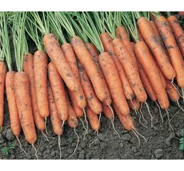 Морковь Каротина (инкрустированные)