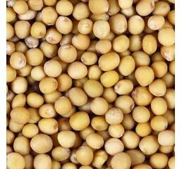 Семена горчицы Талисман белая