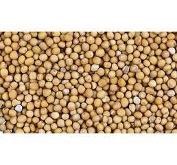 Семена горчицы Тавричанка желтая