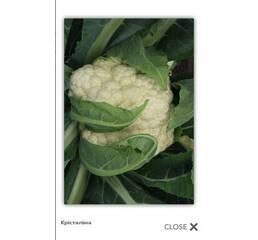Семена капусты цветной - Кристалина