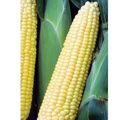 Кукурудза цукрова Шеба за 3 г
