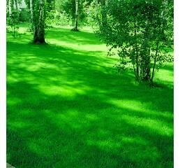 Газонна трава Універсальна