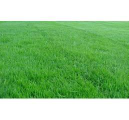 Газонна трава Спортивна