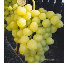 Виноград Аркадія (0,5-1,5 л)