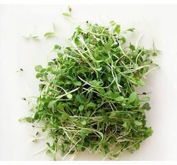 Мікрозелень «Люцерна» за 10 г