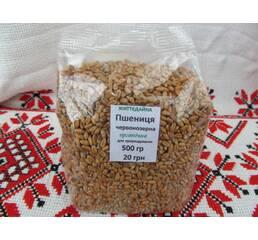 Пшениця червонозерна органічна життєдайна купити в Україні