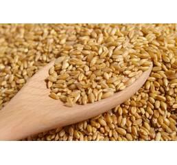 Пшеница 4 класса