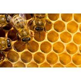Виробництво меду і борошна