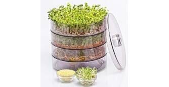 Пророщувач для насіння: яка його користь та особливості?