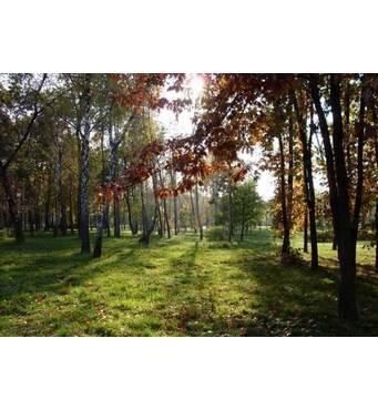 Продам ділянку в с.Туринка Львівської області