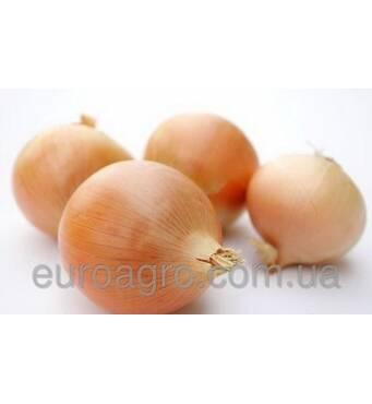 Купить семена лука Syngenta (Сингента)
