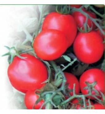 Купить семена овощей оптом