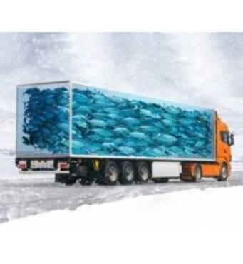 Перевозка замороженной рыбы — лучшие условия для вашего товара