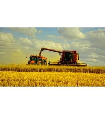Сбор урожая - быстро и квалифицированно
