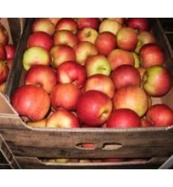 """Купити яблука Чемпіон в фермерському господарстві """"Перлина Поділля"""""""