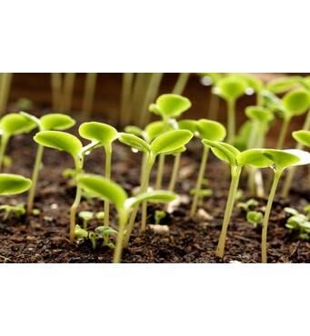 Заказать профессиональное внесения минеральных удобрений в почву. Заказывайте услуги в Хмельницкой области