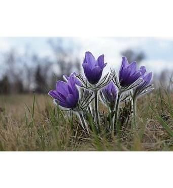Саджанці декоративних чагарників й інших видів рослин недорого