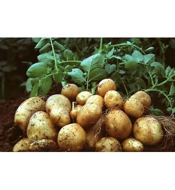 Предлагаем купитьмикроудобрения для картофеля