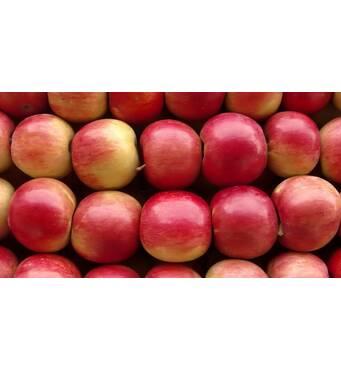 Купить зимние сорта яблок цена лучшая