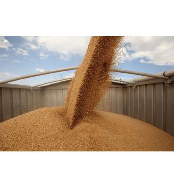 Стоимость хранения зерна на элеваторе Украина лучшая у нас