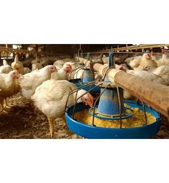 Комбикорм для птиц купить оптом предлагает компания ОРАС