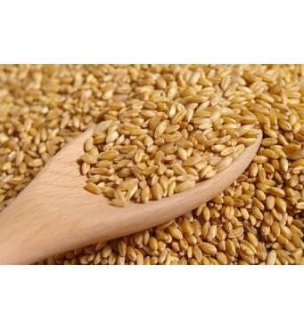 Купить пшеницу 4 класса оптом в Луцке!