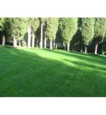 Семена газонных трав купить недорого