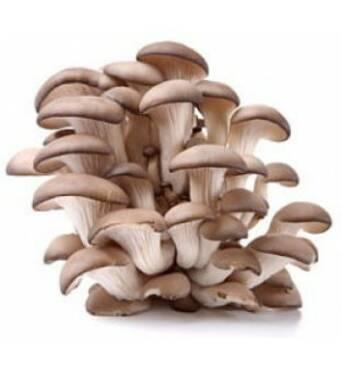 Купить мицелий грибов вешенка
